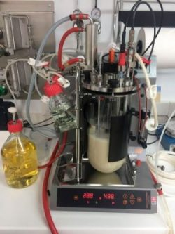 Enzyme-production-in-bioreactor